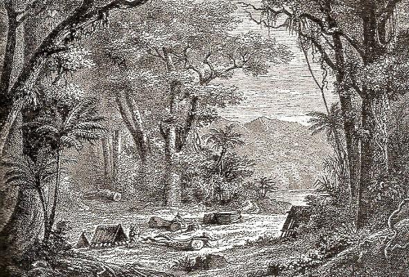La recolte du quinquina 1730